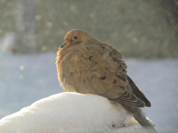Dove on Deck